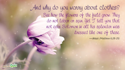 Matthew 6.28-29